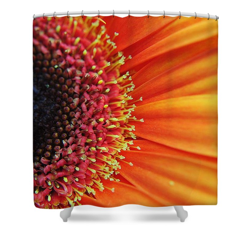 Floral Shower Curtain featuring the photograph Ray Of Sunshine by Frozen in Time Fine Art Photography