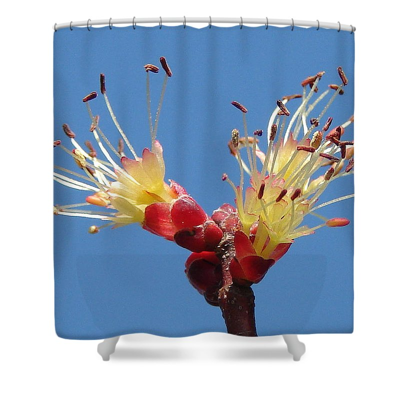 Shower Curtain featuring the photograph Re-awakening by Luciana Seymour