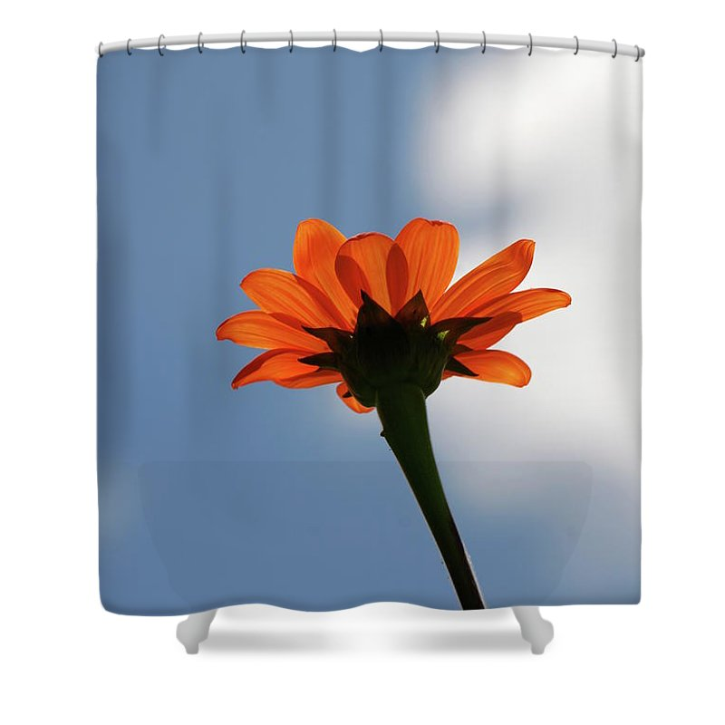 Orange Flower Shower Curtain featuring the photograph Reach For The Sky by Debbie Karnes