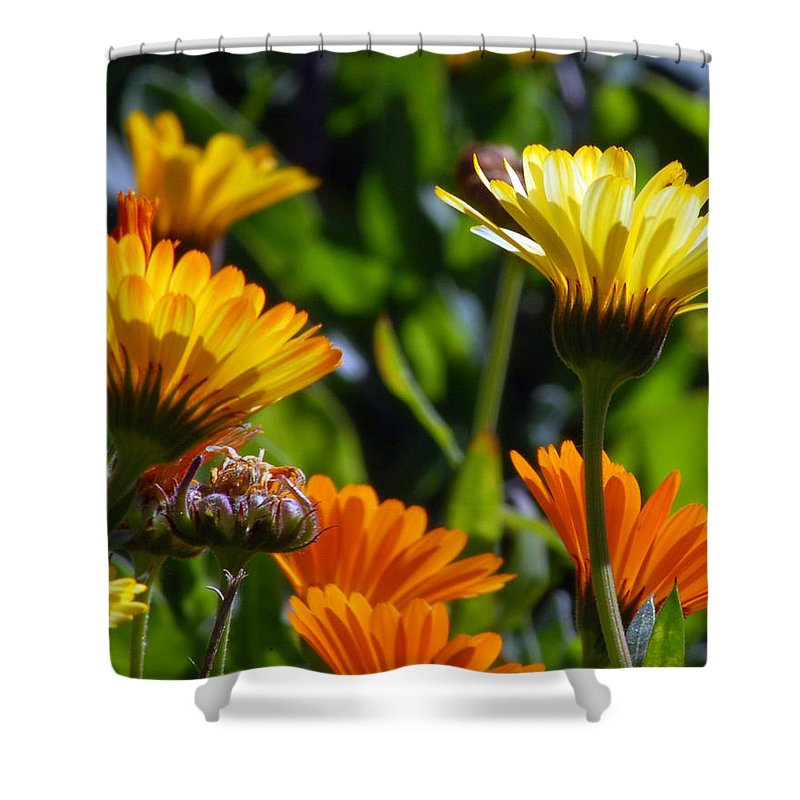 Flower Shower Curtain featuring the photograph Reach For The Sun 1 by Amy Fose