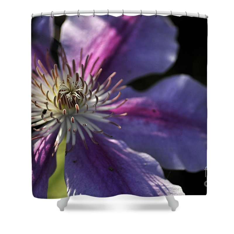 Clay Shower Curtain featuring the photograph Reach For The Sun by Clayton Bruster