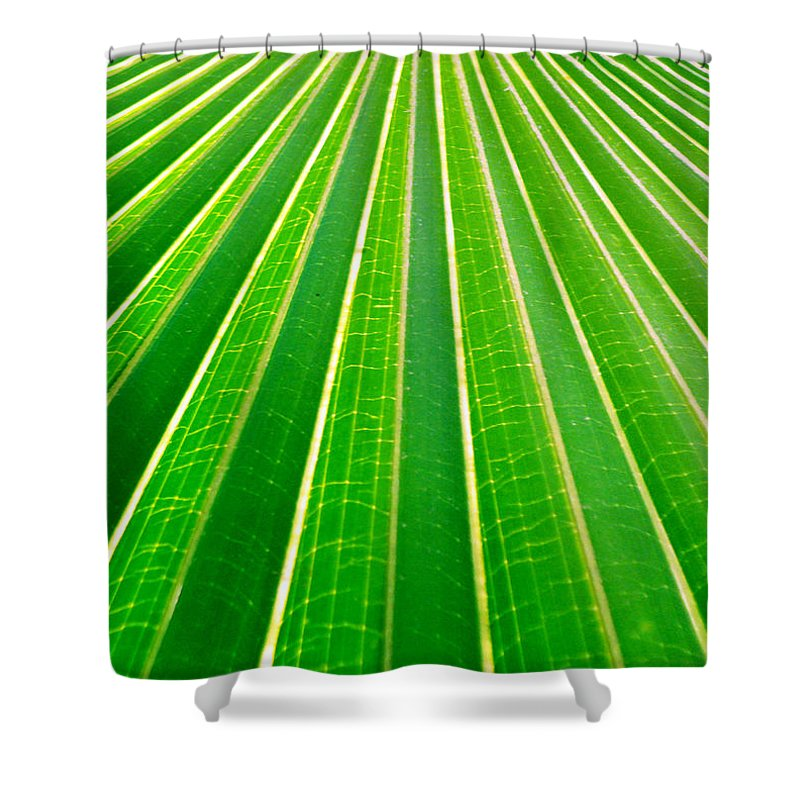 Nature Shower Curtain featuring the photograph Reaching Out by Holly Kempe