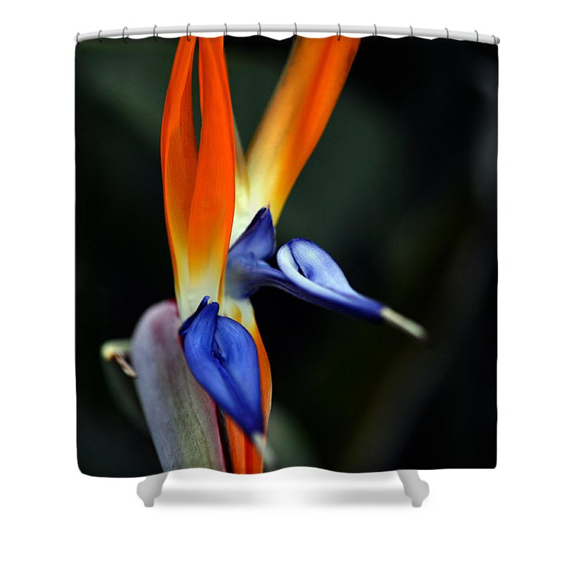 Clay Shower Curtain featuring the photograph Ready Aim . . . by Clayton Bruster
