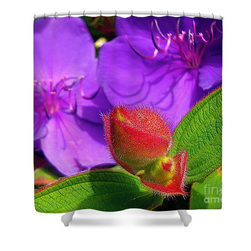 Flower Shower Curtain featuring the photograph Ready To Bloom by Jerome Stumphauzer