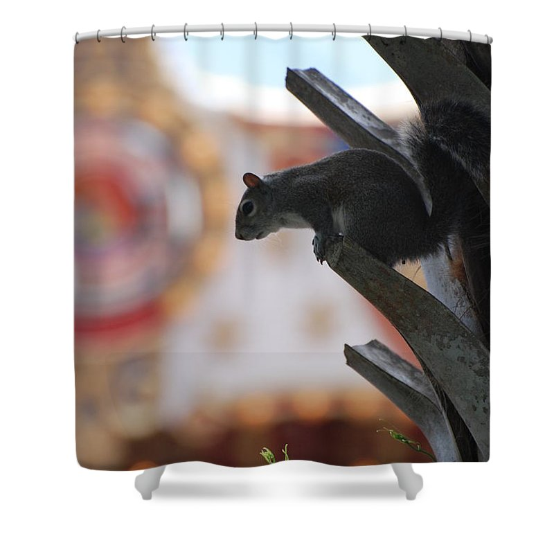 Squirrel Shower Curtain featuring the photograph Ready To Jump by Rob Hans