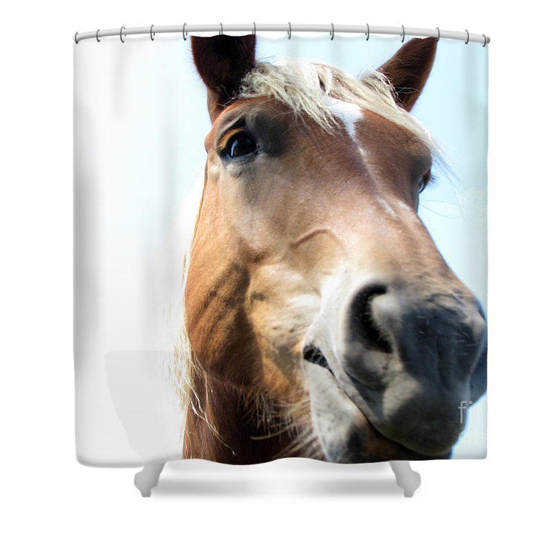 Horse Shower Curtain featuring the photograph Really by Amanda Barcon