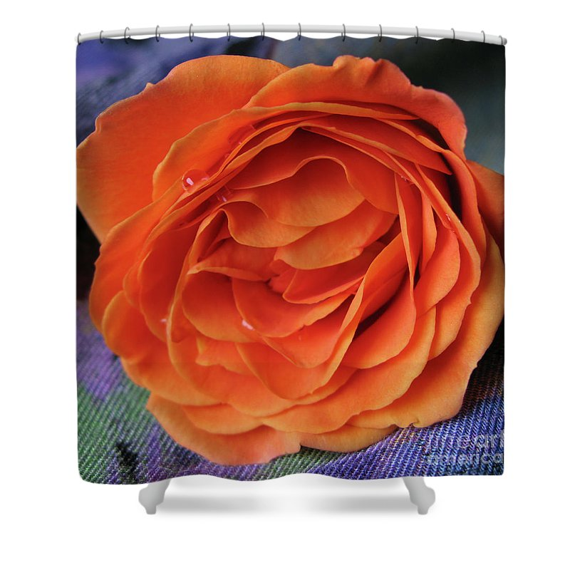 Rose Shower Curtain featuring the photograph Really Orange Rose by Ann Horn
