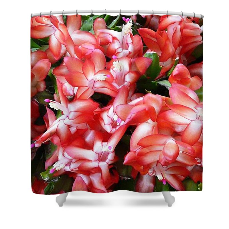 Plant Shower Curtain featuring the photograph Red Abundance by Valerie Ornstein