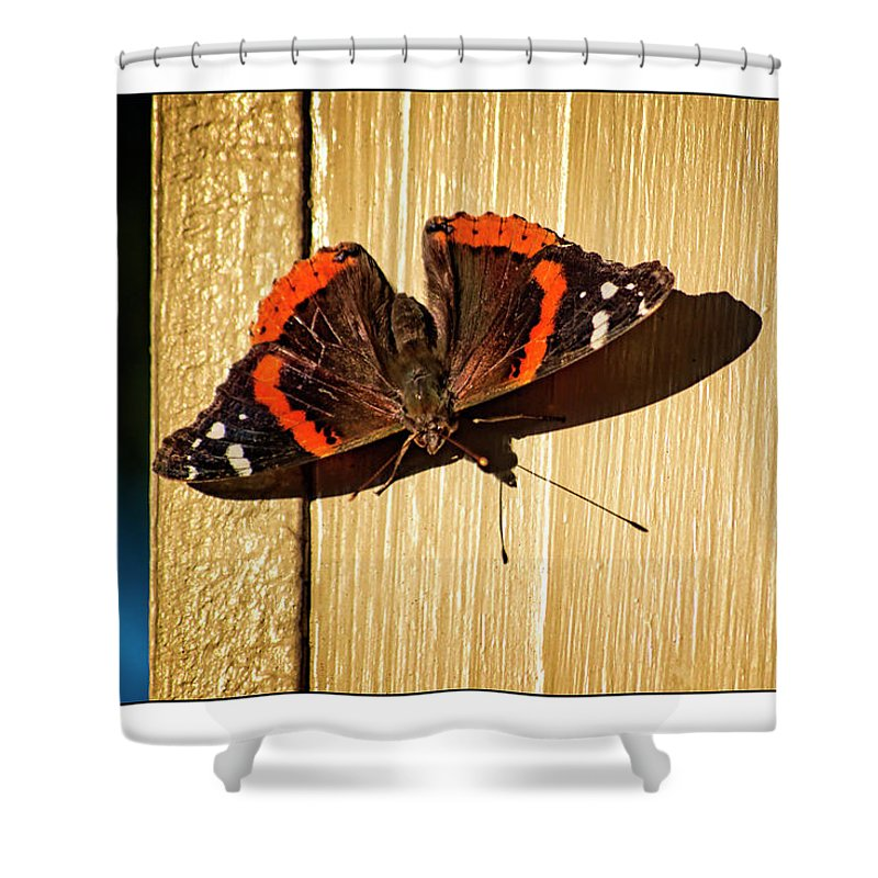 Red Admiral Shower Curtain featuring the photograph Red Admiral by Marshall Barth