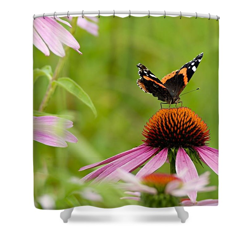 Red Admiral Shower Curtain featuring the photograph Red Admiral On Cone Flower by Larry Ricker