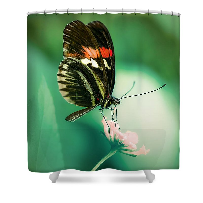 Butterfly Shower Curtain featuring the photograph Red And Black Butterfly On White Flower by Jaroslaw Blaminsky
