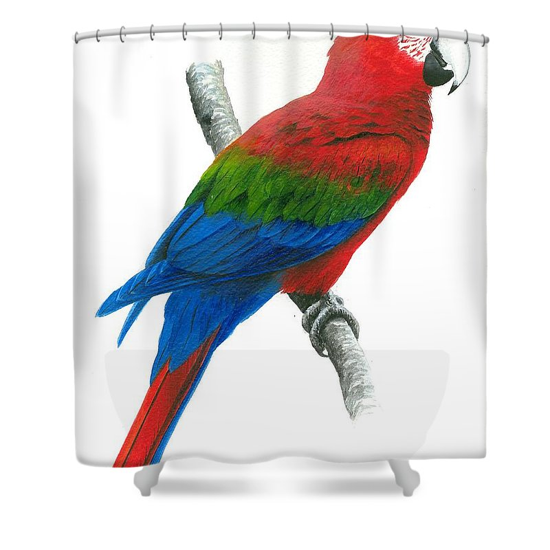 Chris Cox Shower Curtain featuring the painting Red And Green Macaw by Christopher Cox