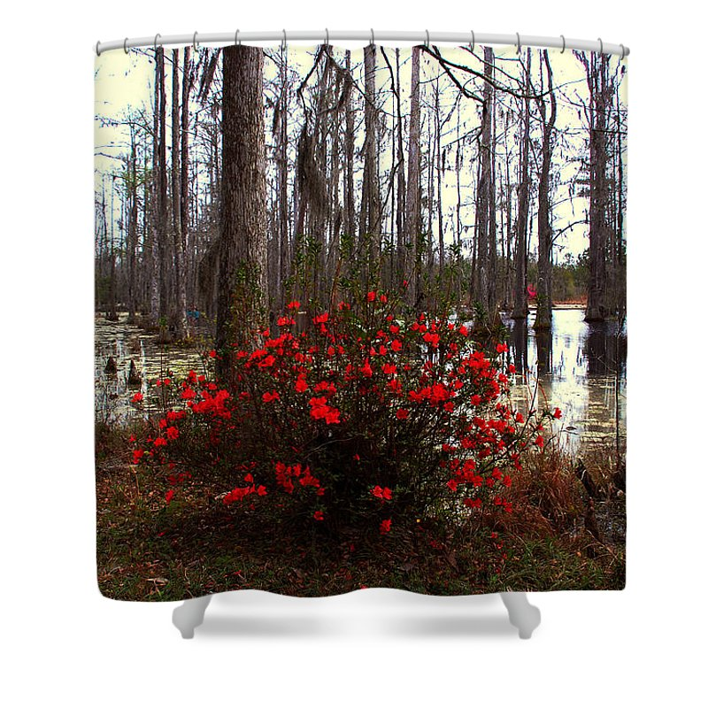 Azaleas Shower Curtain featuring the photograph Red Azaleas In The Swamp by Susanne Van Hulst