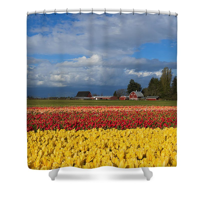 Red Barn Shower Curtain featuring the photograph Red Barn Tulip Farm by Mike Dawson