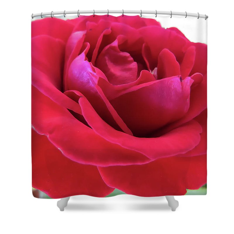 Rose Shower Curtain featuring the photograph Red Beauty by Zina Stromberg