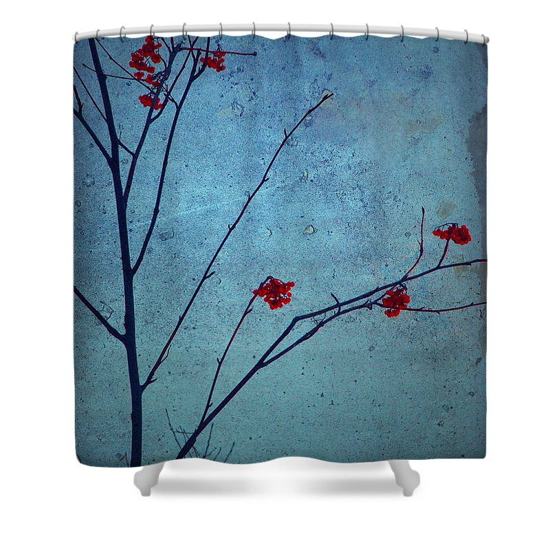 Simplicity Shower Curtain featuring the photograph Red Berries Blue Sky by Tara Turner