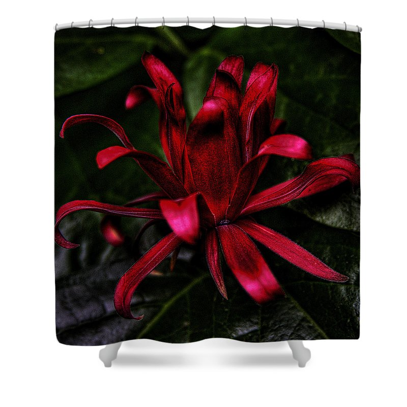 Hdr Shower Curtain featuring the photograph Red Bloom by David Patterson