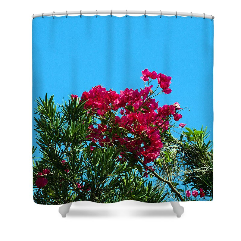 Red; Bougainvillea; Glabra; Juniperus; Vitginiana; Silicicola; Coastal; Cedar; Tree; Vine; Grow; Gro Shower Curtain featuring the photograph Red Bougainvillea Glabra Vine by Allan Hughes