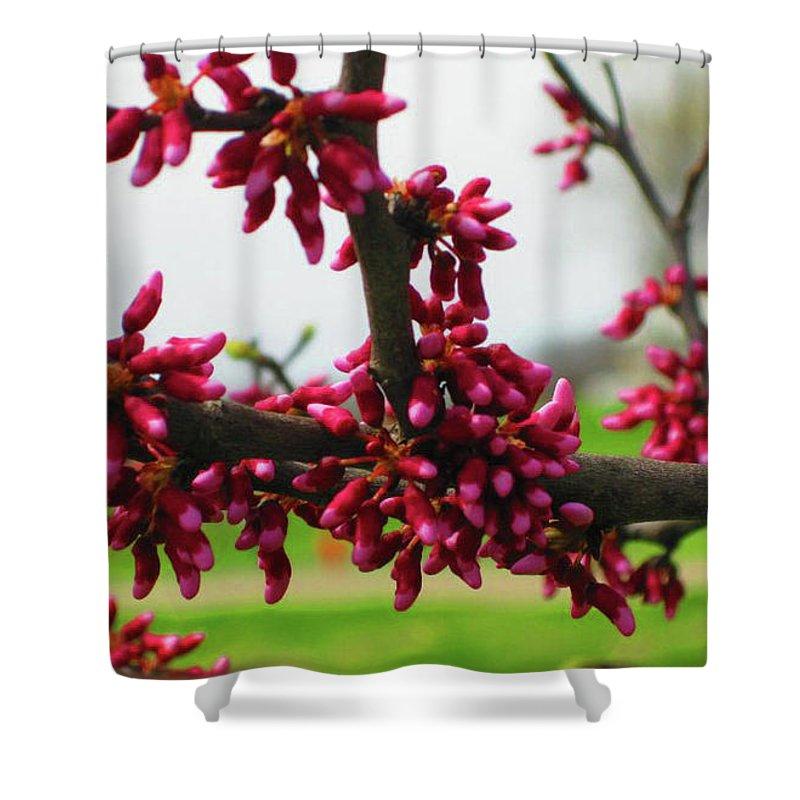 Shower Curtain featuring the photograph Red Buds by Brandi Nierman