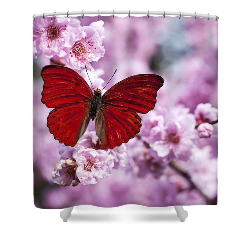 Red Shower Curtain featuring the photograph Red Butterfly On Plum Blossom Branch by Garry Gay