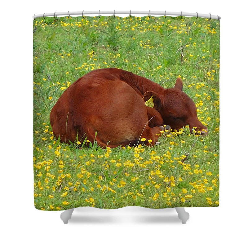 Calf Shower Curtain featuring the photograph Red Calf In The Buttercup Meadow by Susan Baker