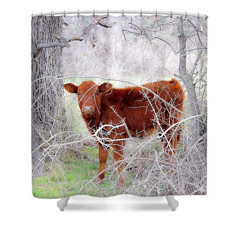 Red Shower Curtain featuring the photograph Red Calf In Winter Brush by Jeanie Mann
