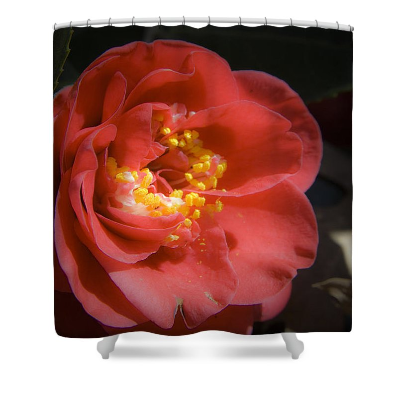 Camellia Shower Curtain featuring the photograph Red Camellia Bloom by Teresa Mucha