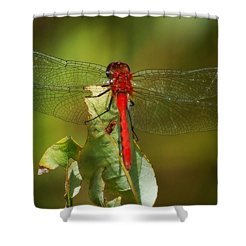 Digital Photograph Shower Curtain featuring the photograph Red Dragon Fly by David Lane