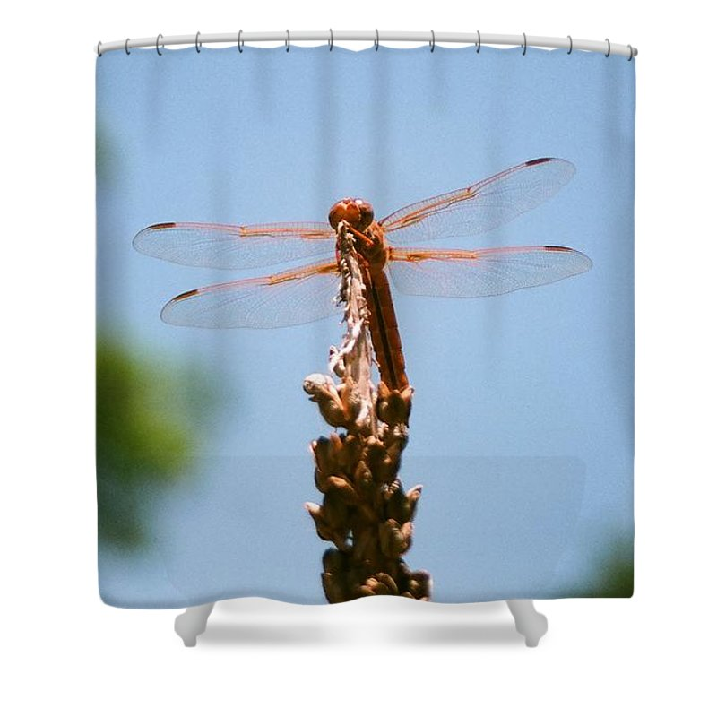 Dragonfly Shower Curtain featuring the photograph Red Dragonfly by Dean Triolo
