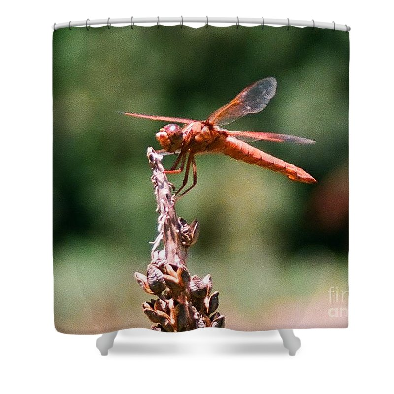 Dragonfly Shower Curtain featuring the photograph Red Dragonfly II by Dean Triolo