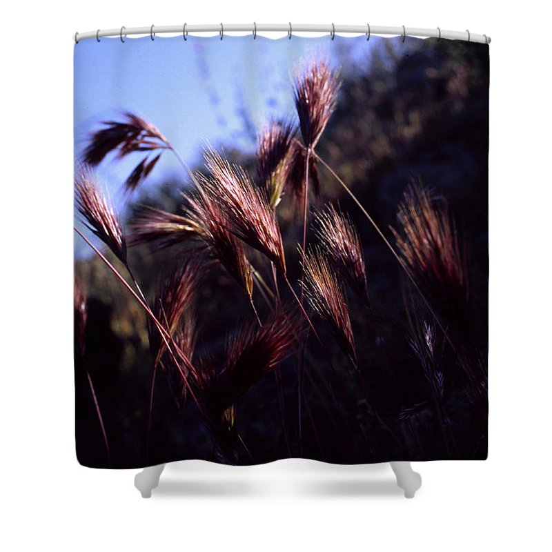 Nature Shower Curtain featuring the photograph Red Feathers by Randy Oberg