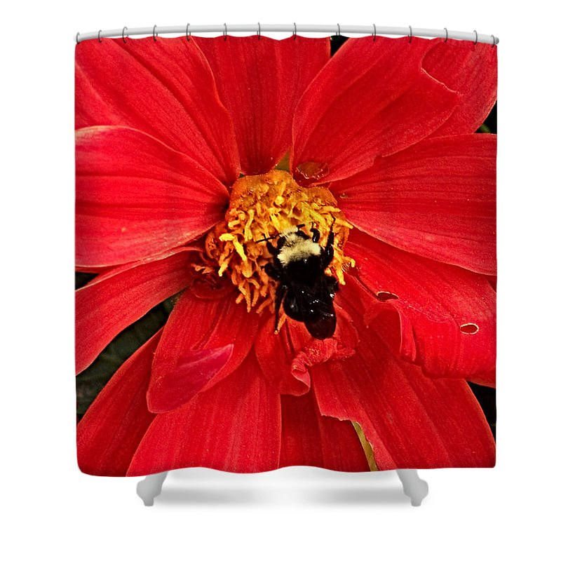 Flower Shower Curtain featuring the photograph Red Flower And Bee by Anthony Jones