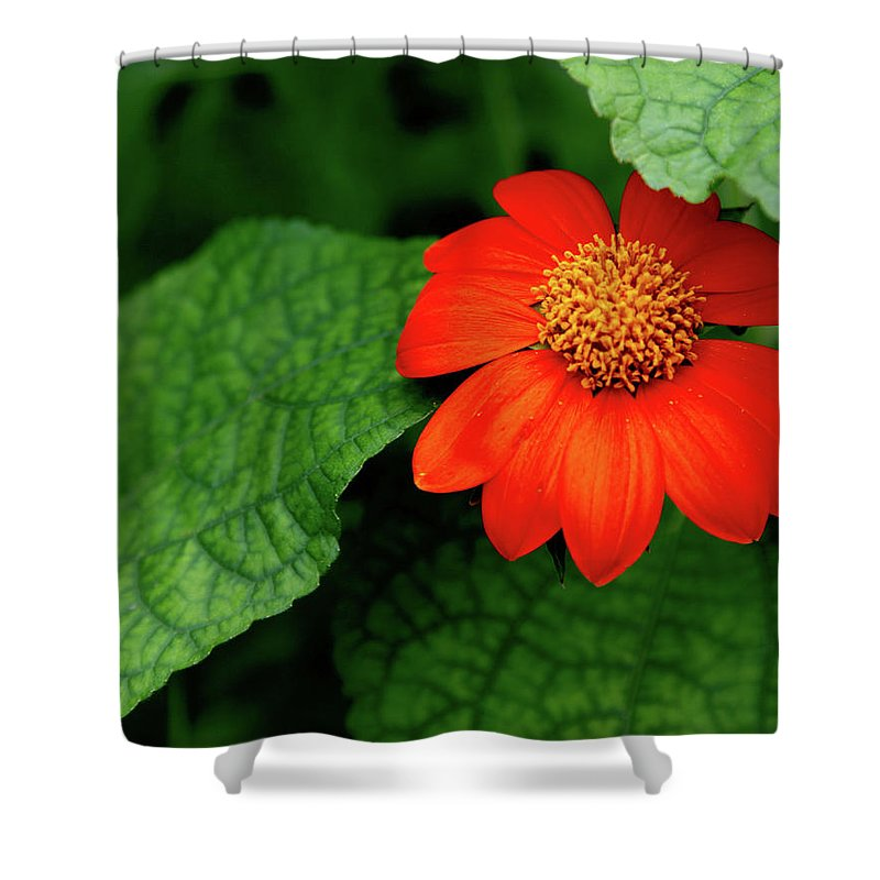 Flower Shower Curtain featuring the photograph Red Flower by Charlie Grindrod