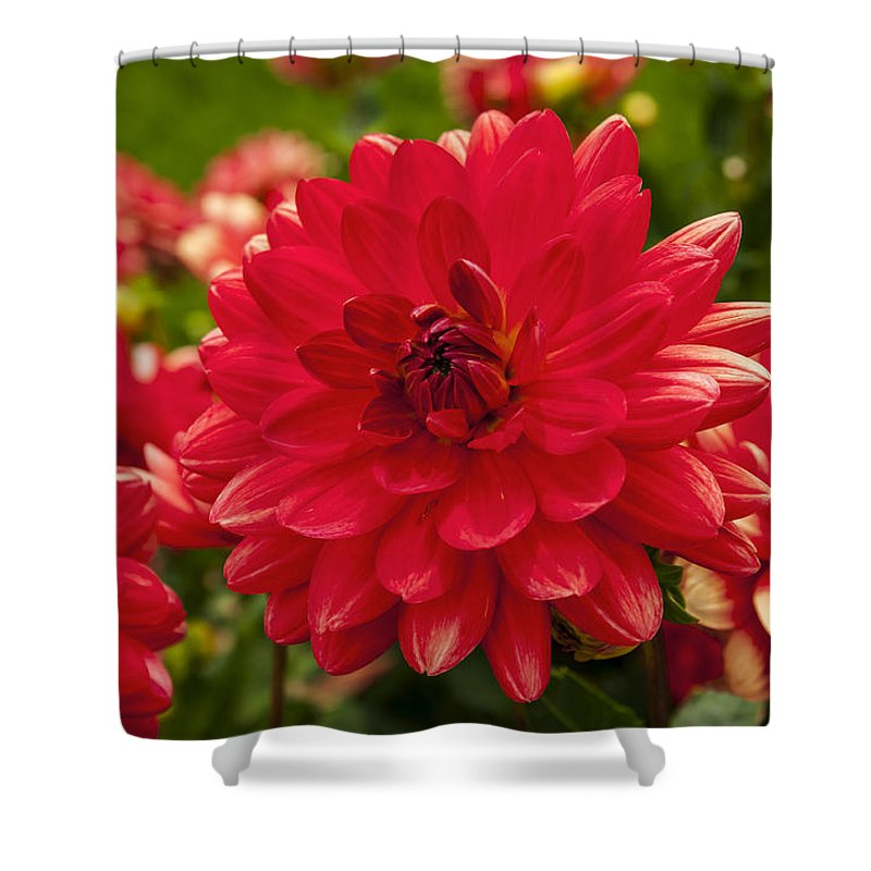Red Shower Curtain featuring the photograph Red Flower Close Up by Enrico Della Pietra