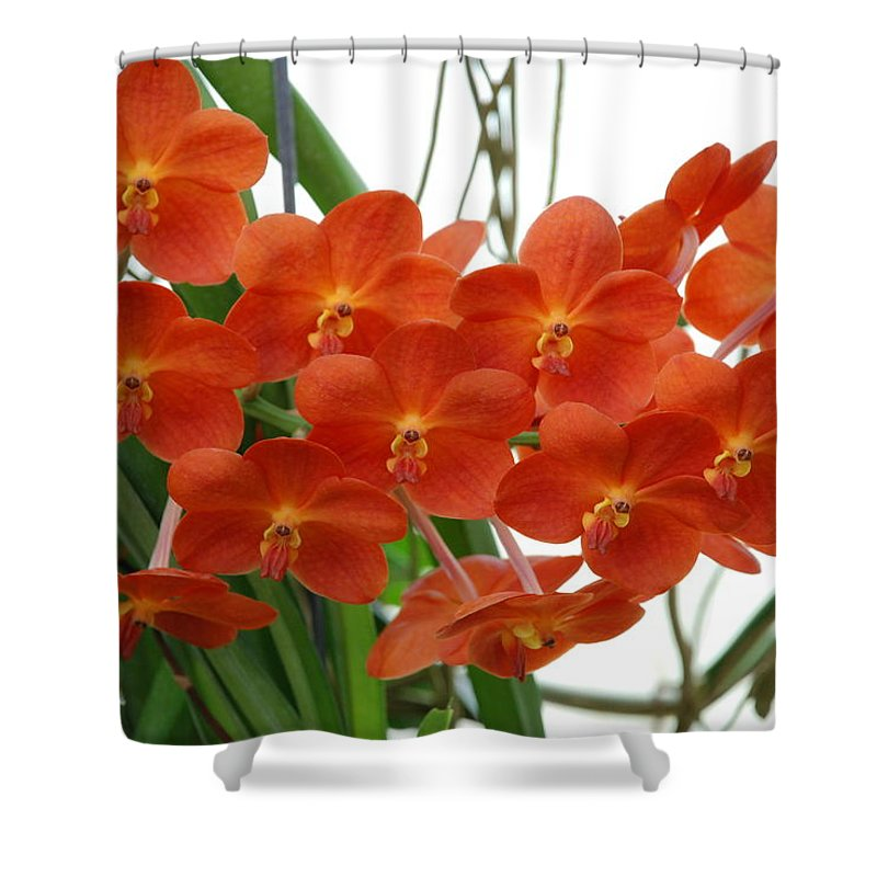 Macro Shower Curtain featuring the photograph Red Flowers by Rob Hans