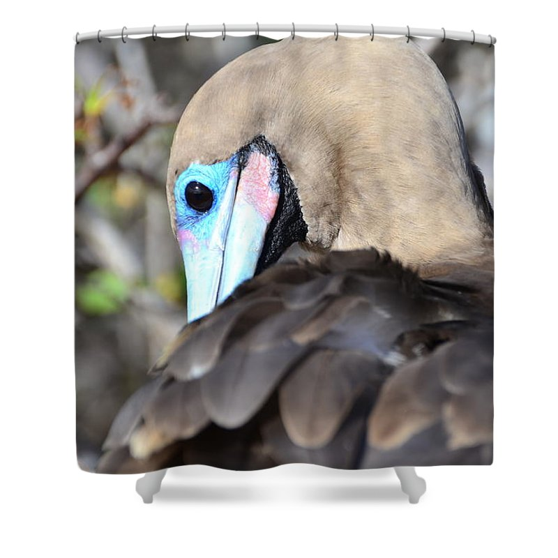 Galapagos Shower Curtain featuring the photograph Red Footed Booby by Harry Coburn