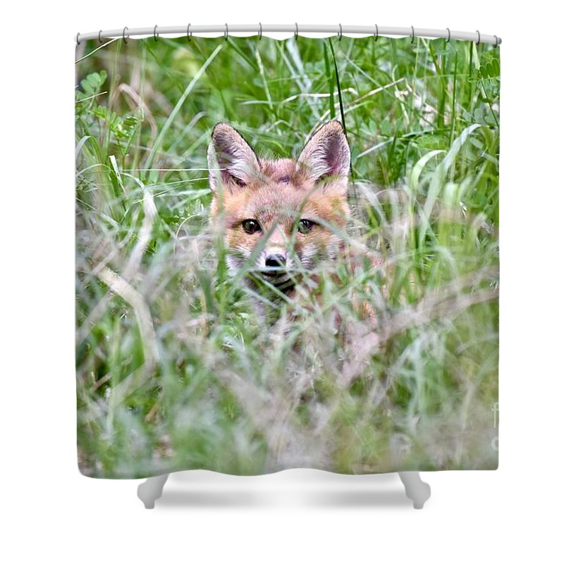 Baby Fox Shower Curtain featuring the photograph Red Fox Baby Hiding by Jeramey Lende