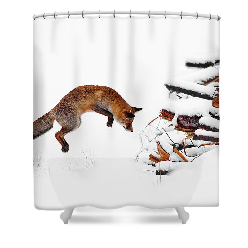 Red Fox Shower Curtain Featuring The Photograph Jumping In Snow By Roeselien Raimond