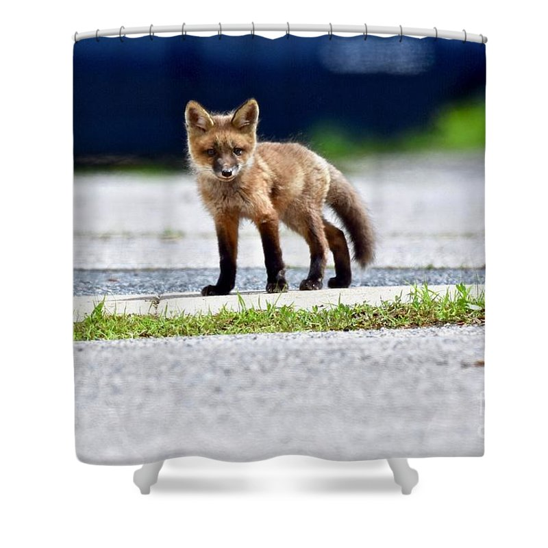 Animal Shower Curtain featuring the photograph Red Fox Kit On Road by Jeramey Lende