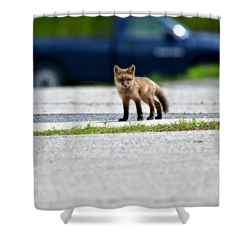 Animal Shower Curtain featuring the photograph Red Fox Kit Standing On Old Road by Jeramey Lende
