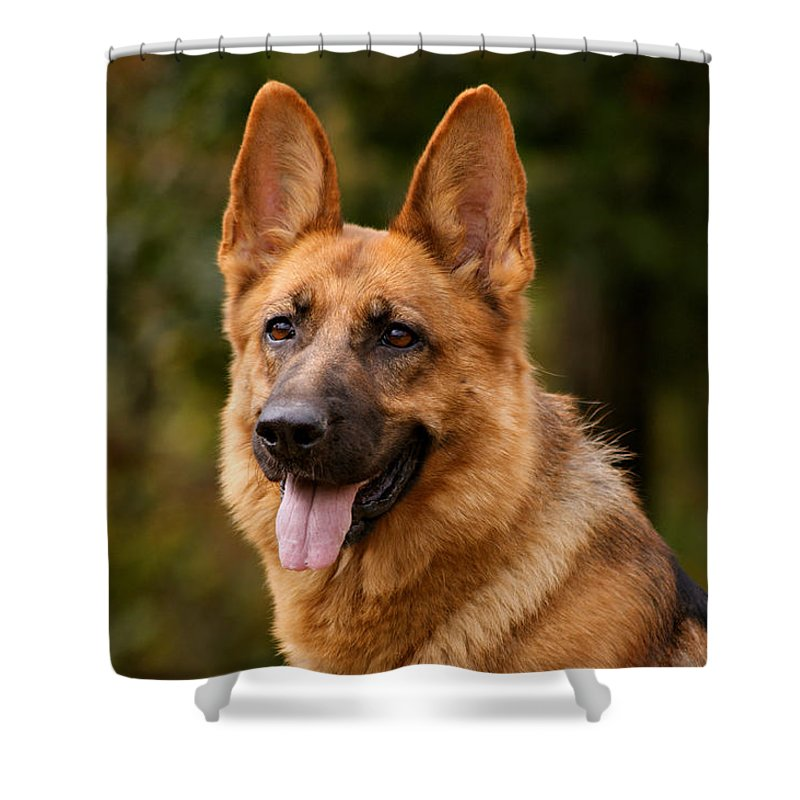 German Shepherd Shower Curtain featuring the photograph Red German Shepherd Dog by Sandy Keeton