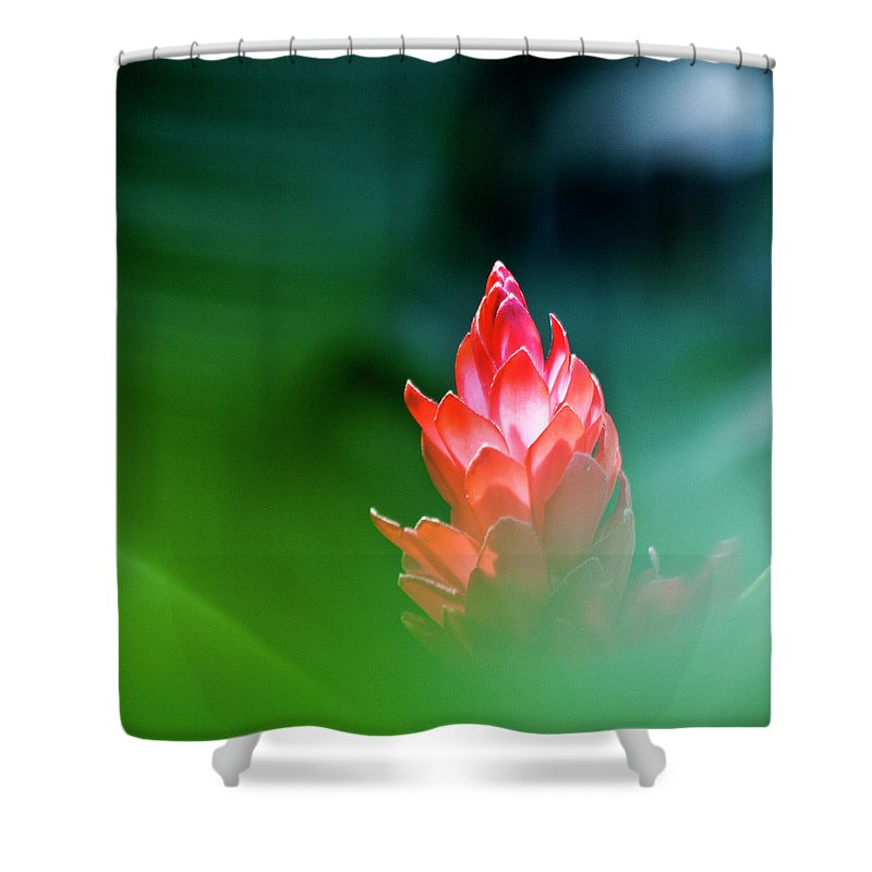 Ginger Flower Shower Curtain featuring the photograph Red Ginger by Heiko Koehrer-Wagner