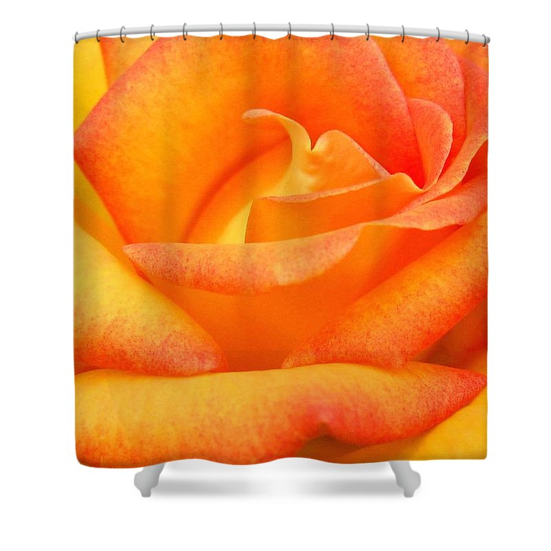 Rose Shower Curtain featuring the photograph Red Gold Rose by Will Borden