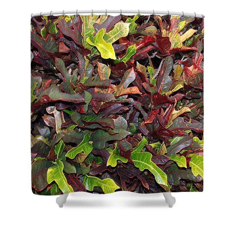 Macro Shower Curtain featuring the photograph Red Green Leaves by Rob Hans