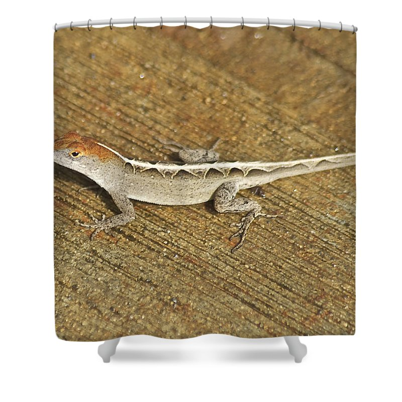 Wildlife Shower Curtain featuring the photograph Red Head by Michael Peychich