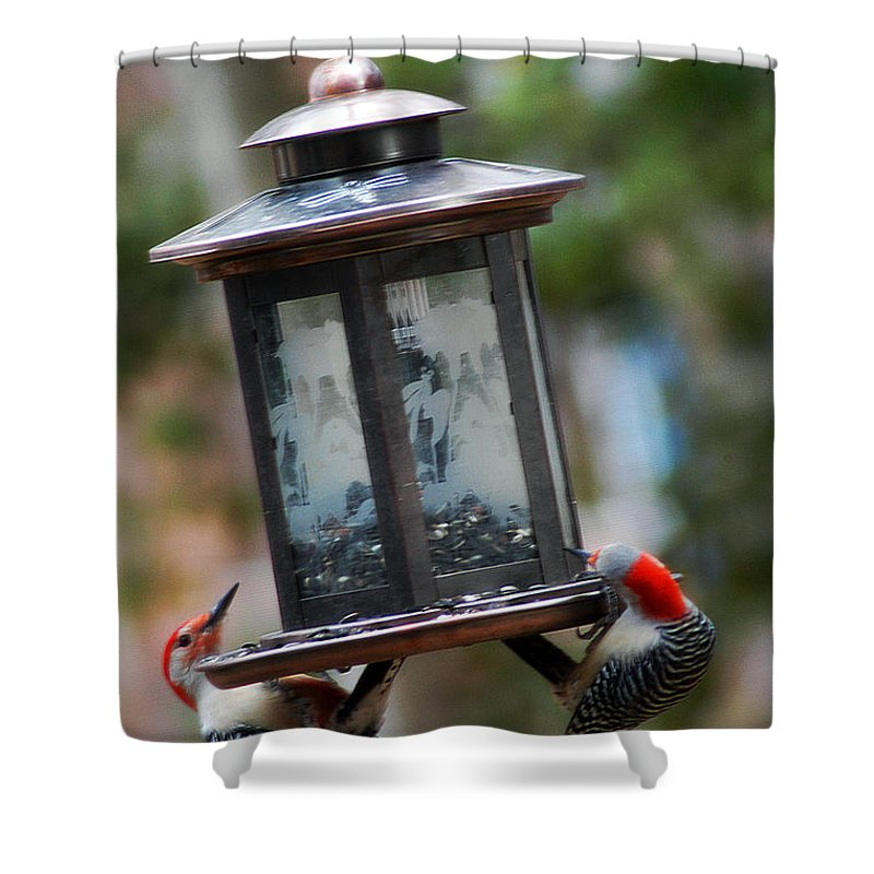 Clay Shower Curtain featuring the photograph Red Head Wood Peckers On Feeder by Clayton Bruster