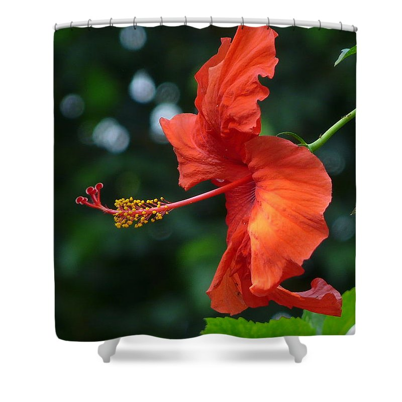 Flower Shower Curtain featuring the photograph Red Hibiscus by Valerie Ornstein