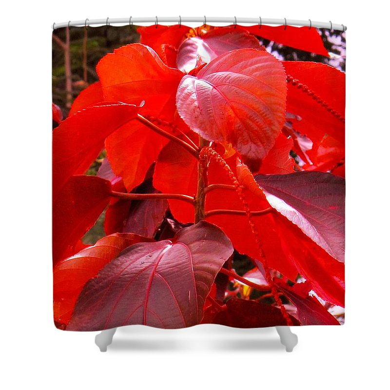 Red Shower Curtain featuring the photograph Red by Ian MacDonald