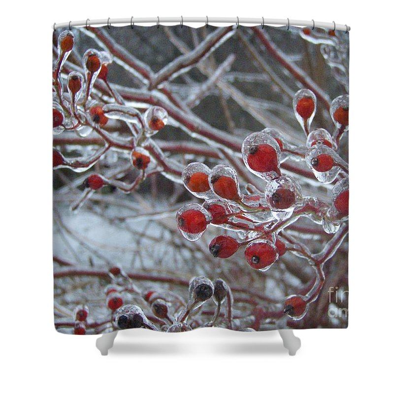 Berries Red Ice Storm Shower Curtain featuring the photograph Red Ice Berries by Kristine Nora