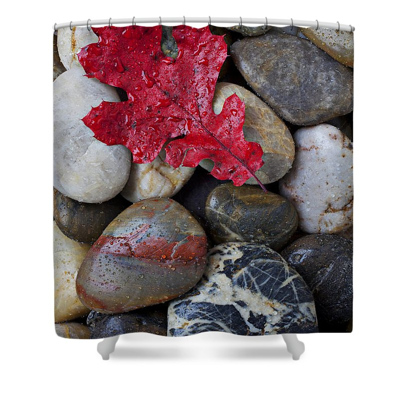 Red Leaf Shower Curtain featuring the photograph Red Leaf Wet Stones by Garry Gay